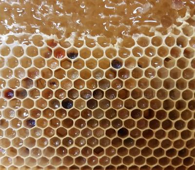 Hexton Hives
